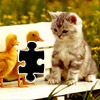 Kitten and ducks Icon