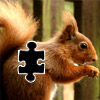Squirrel Puzzle icon